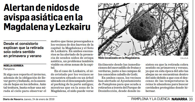 Nido de avispas en Lezkairu (ya reportado al Ayto)